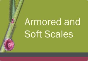 Scales Course