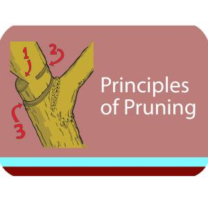 Principles of Pruning Course