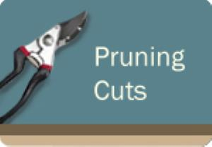 Pruning Cuts Course