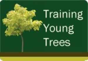 Training Young Trees Course