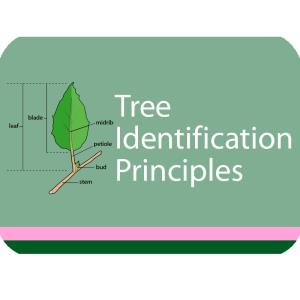 Tree ID Principles Course