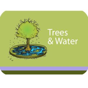 Trees & Water Course