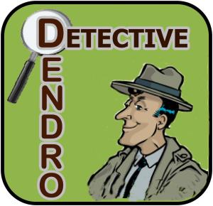 Dendro Icon